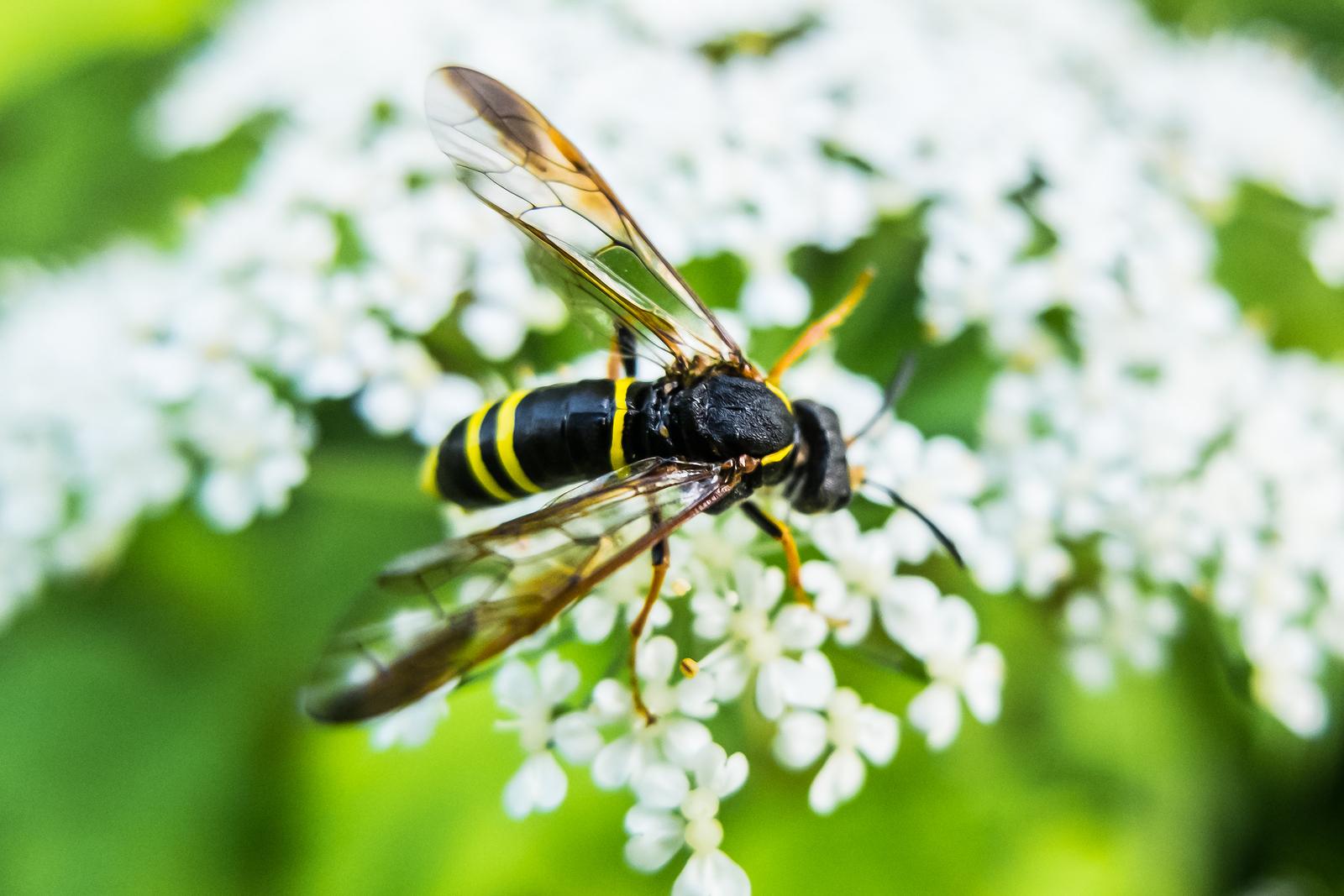 Understanding the Different Looks of Bug Bites