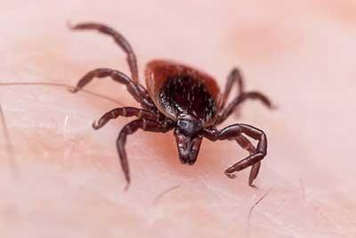 powassan virus a tick borne disease