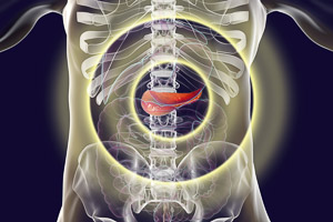 3d illustration of the pancreas