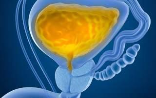 Healthy Bladder with Urine