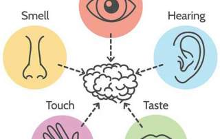 the five senses and the brain