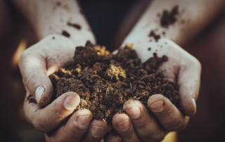 Photo of dirt cupped in someone's hands