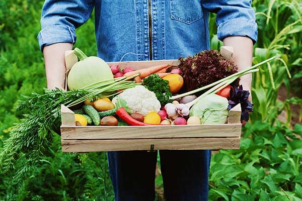 Fall Vegetable Garden Guide SignatureCare Emergency Center